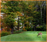 When you take your time on a golf court, you can see amazing things !