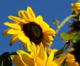 Adios My Love said the Bee
