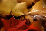 Autumn's Freshness