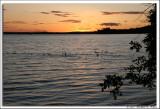 Ducks at Sunset.jpg