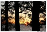 Golden Lake sunset.jpg