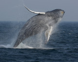 Latest Whale Watch 2007