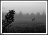 Dripping Morning Mist.
