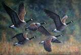Appel migratoire - Huile 20 X 30 - Collection privée