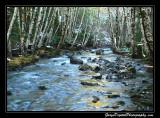 creek01_6699.jpg