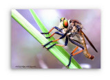 w_Insect_02a.jpg