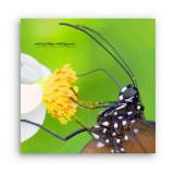 w_Butterfly_01aa.jpg