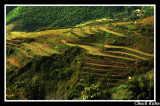 Rice Fields of SaPa, Vietnam
