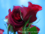 2.16.07 roses