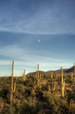 Moonrise, Saguaro National Park _DSC5787