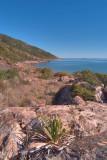 Shelly Beach, pandanus, rocks R0010356