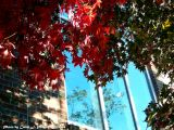 Fall Reflecting Up!