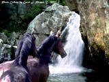 Heated Pursuit  ~ Two Horses and Waterfall!