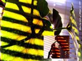Angel Wing Begonia.