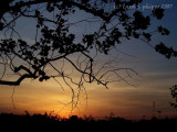 MSH Sunset.