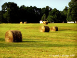 Hay-Day!