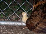 One of Three New Chicks.