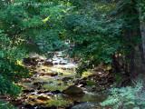 Creek alongside a Country Lane.