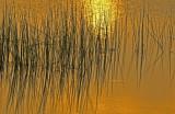 Sunrise on the Marsh 9085