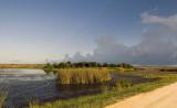 Viera Wetlands  1736