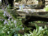 Salt Springs State Park DSC02423.jpg