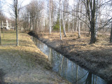 The Birches Reflecting In the Ditch