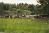 Another fence, Jyskyjärvi, Russian Karelia 2001