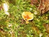Fungi & Moss