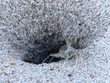 Crab & Hole