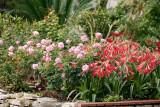 Easter Lilies II