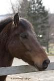 Robin's Horse