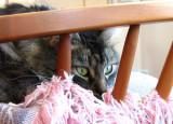 Mica watching