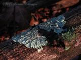 Lichen Light Green