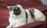 Kitty Van Loch (Bad Fur Day)