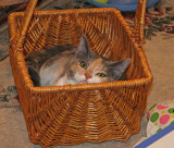 Josie fitting herself into a basket