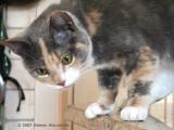 Kitty Josie Naughty