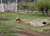 Trek horse grazing