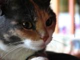 Visitor Kitty Josie
