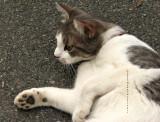 Kitty Rita