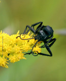Villainous Wasp