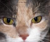 Josie Eyes