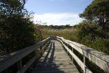Sunken Forest Pathway