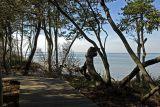Sunken Forest on Fire Island