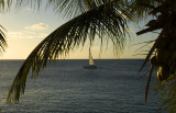 Coconuts and Sails
