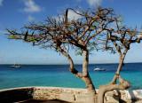 Caribbean Seaside