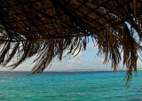 under the palapa