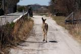 deer runs