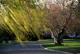 springtime in the suburbs