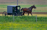 Horse and buggy52002.jpg