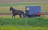 Horse and Buggy52003.jpg